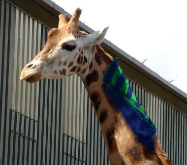 giraffe_shawl